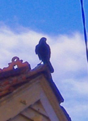 raven-close-up.jpg